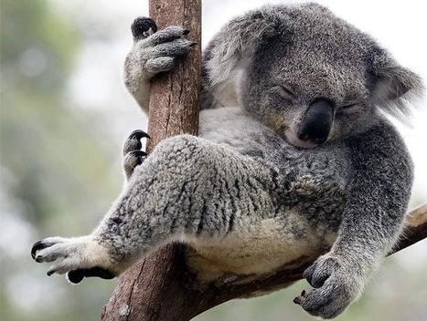 Noodles, koalas and land deals | Nature + Economics | Scoop.it