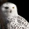 Best of Birding