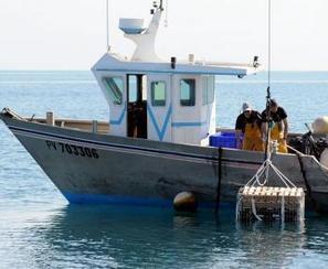 Le vin élevé sous la mer à Gruissan - La Dépêche | Oenologie | Scoop.it
