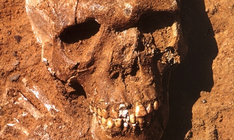 Skeletons of war dead from 11,000 BC go on show at the British Museum | Egyptology and Archaeology | Scoop.it