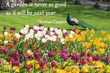 Thomas Cooper quote | The Muse | Scoop.it