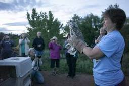 Mountain Shadows owls take flight, released from wildlife rehab - Colorado Springs Gazette | Conservation Biology, Genetics and Ecology | Scoop.it
