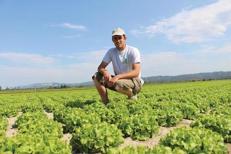 Ces producteurs qui misent sur la salade | HORTICULTURE BOTANIQUE | Scoop.it