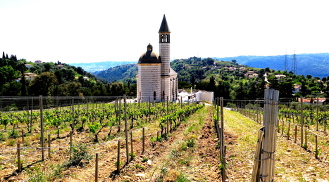 A la découverte du Vignoble de Bellet à Nice | Nice Tourisme | Scoop.it