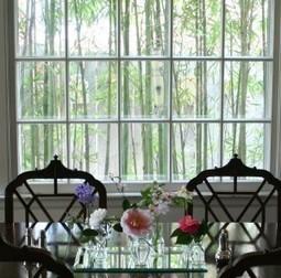 America in bloom – plants for friendship… | Tarheel Gardening.COM | Annie Haven | Haven Brand | Scoop.it