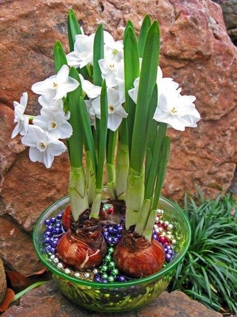 January Gardening Chores : HGTV Gardens   Garden Ideas by Team Pendley   Scoop.it