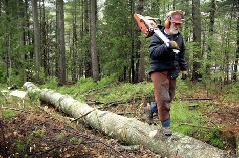 LePage's remark about loggers 'crossed the line'   The Portland Press Herald / Maine Sunday Telegram   enjoy yourself   Scoop.it