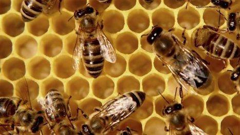 L'usage actuel du pesticide imidaclopride «ne peut durer», affirme Santé Canada   Nature to Share   Scoop.it