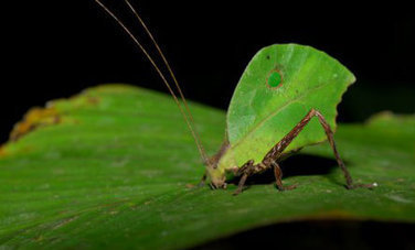 Amazing Leaf-Mimicking Animals | This Gives Me Hope | Scoop.it