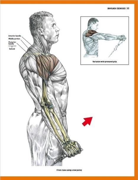 Core Training Anatomy Pdf Free Download | damab...