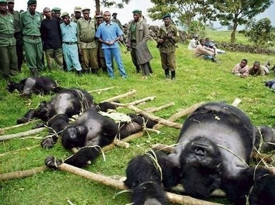 How do you deal with animal poachers? | Wildlife Trafficking: Who Does it? Allows it? | Scoop.it