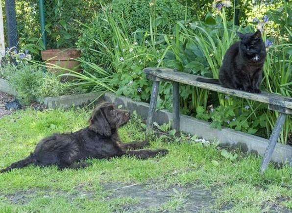 Comment éviter les dégâts au jardin avec les animaux de compagnie