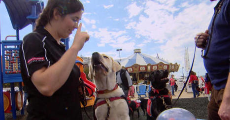 """Hero dogs"" trained to help disabled vets 