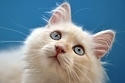 Can You Judge A Cat By Its Color? | Cats! | Scoop.it