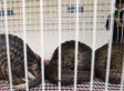 Thailand's Underworld Of Wildlife Trafficking | Thailand Business News | Scoop.it