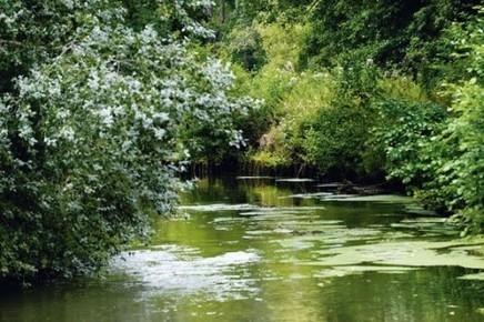 L'eau se ressource grâce à l'agriculture bio - Rue89 Bordeaux | Economie Responsable et Consommation Collaborative | Scoop.it