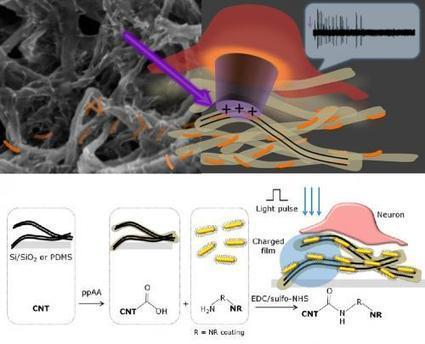Carbon nanotube film restores light sensitivity to blind retinas | Science technology and reaserch | Scoop.it