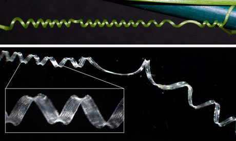 Science: How the Cucumber Tendril Coils and Overwinds | Plant genetics | Scoop.it