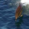 Le journal d'infos sur les Baleines, Dauphins, Cachalots, Orques et Marsouins