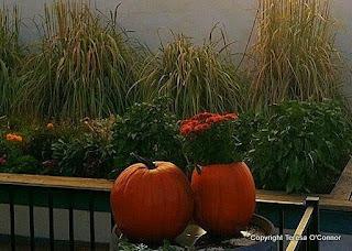Pumpkins Continue to Delight | Annie Haven | Haven Brand | Scoop.it