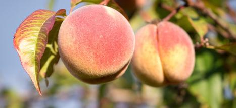 Peach: le prochain grand réseau social ? Tout ce qu'il faut savoir | Social Media Curation par Mon Habitat Web | Scoop.it