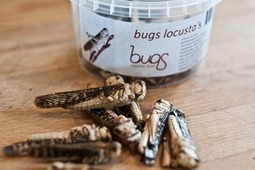 It's time to eat insects for the good of the planet, say experts | Entomophagy: Edible Insects and the Future of Food | Scoop.it