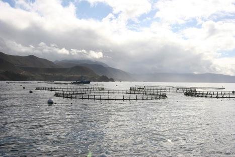 NOAA report bullish on marine aquaculture | Viet Linh | Scoop.it