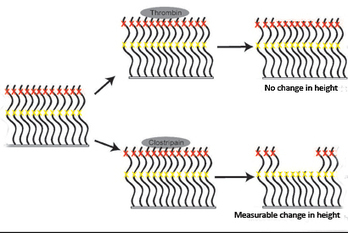 Scientists create new protein-based material with some nerve | :: Science Innovation :: Research News :: | Scoop.it