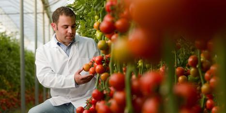 Avoid Eating Genetically Engineered Foods | Plant Based Nutrition | Scoop.it