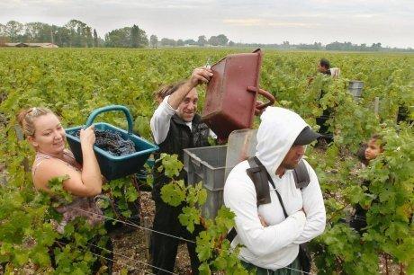 Vin : le millésime 2012 est né dans la douleur | Oenotourisme dans le Bordelais | Scoop.it