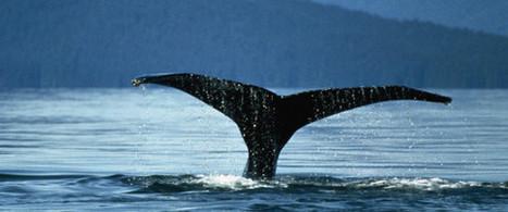 Percer les mystères de la géante bleue | Zones humides - Ramsar - Océans | Scoop.it