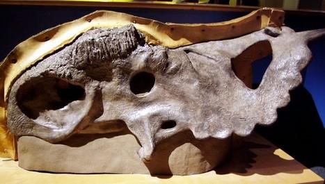 Phenomena: Laelaps | Paleontology News | Scoop.it