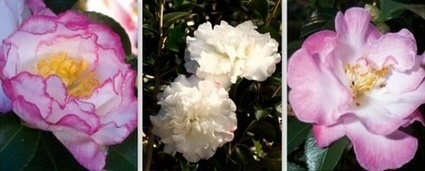 Top 5 Plants for Fall | In the Garden | Southern Living Plant Collection | Annie Haven | Haven Brand | Scoop.it