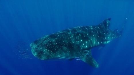 Vidéo Full HD | Santa Maria – Les plus belles plongées des Açores ! | Plongeurs.TV | Scoop.it