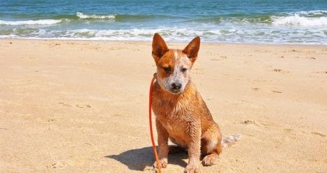 Des secouristes viennent en aide aux chiens sur les plages d'Italie | CaniCatNews-actualité | Scoop.it