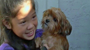 Girl Who Offered Piggy Bank Savings Gets Lost Dog Back | Pet Sitter Picks | Scoop.it