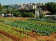 Urban Agriculture In Brazil's Favelas Grows Thanks To Hans Dieter ... | Vertical Farm - Food Factory | Scoop.it