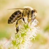 Cómo identificar los tipos de picaduras de insectos | Bichos en Clase | Scoop.it
