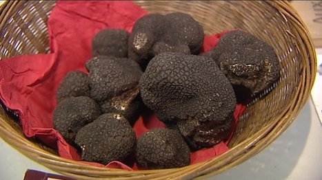 Pour les fêtes de fin d'année, des truffes à prix flambés - France 3 Aquitaine | Agriculture en Dordogne | Scoop.it