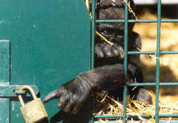 The Ethics of Captivity: A New Book Covers All the Issues | Animal Cruelty | Scoop.it