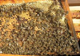 Les ruchers champêtres : 2012 Quelle mauvaise année pour les abeilles !   The Blog's Revue by OlivierSC   Scoop.it