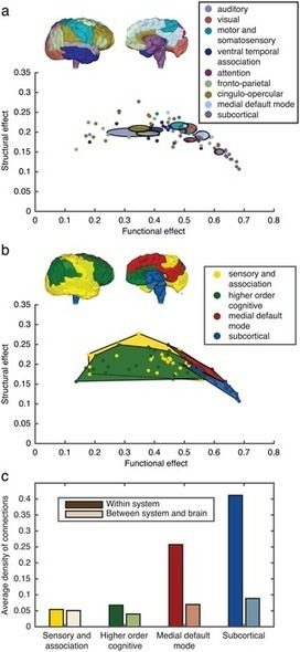 Stimulation-Based Control of Dynamic Brain Networks | Social Foraging | Scoop.it