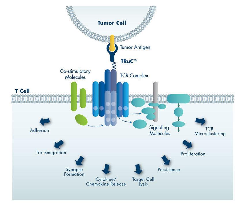 Abz2 Bispecific Platform: TCR2 Therapeutics TRuC™ Platform&nbs