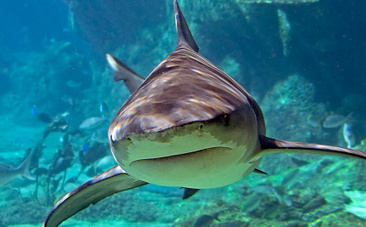 """Why Saying #Shark """"Attacks"""" Is Just Plain Wrong 