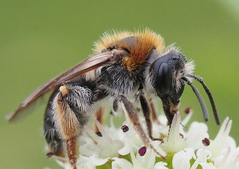 Bees lured into boosting food supply | Gardening | Scoop.it