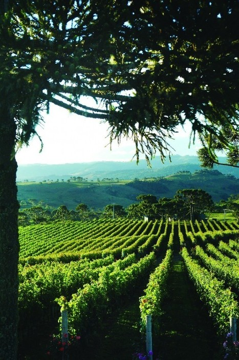 Brazil Ready to Enter #Wine Olympics | Wine website, Wine magazine...What's Hot Today on Wine Blogs? | Scoop.it