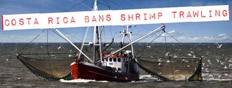 Costa Rica Passes Ban on Shrimp Trawling - Costa Rica Connection | Life on Earth | Scoop.it