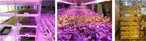 GroRak LED System | Vertical Farm - Food Factory | Scoop.it