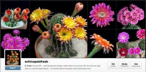 Artesaniaflorae | Artesanía vegetal y arte floral | artesaniaflorae | Scoop.it