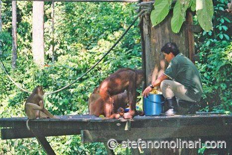 Sepilok Jungle Resort:   Vacation ASEAN   Scoop.it